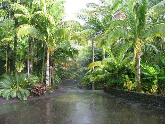 Tropical Landscape Emphasis On Palm Trees Cycads And